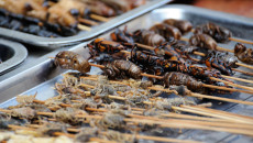 Photograph of cockroaches on skewers